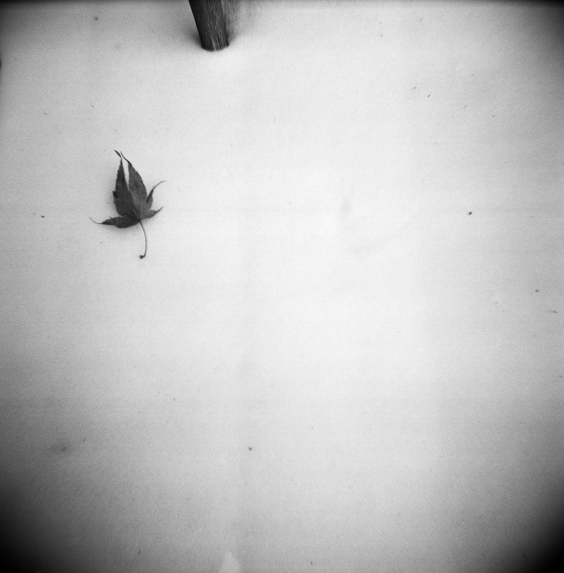 2013-14-PROJECTS-HOLGA-400-1_Ilford-Delta_TIW_scans-003-Edit-2