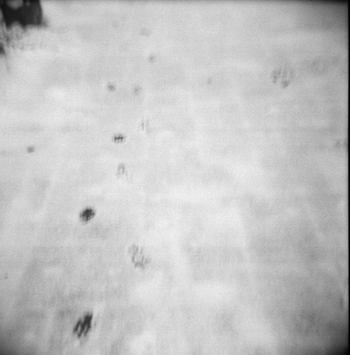 2013-14-PROJECTS-HOLGA-400-2_Ilford-Delta_TIW_scans-008-Edit